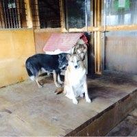 2016年10月24日(月)最近の犬舎の状況