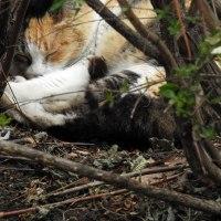 植え込みの猫 un chat dormant