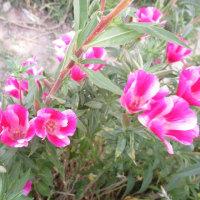 夏の色彩御殿-9   ゴテチア