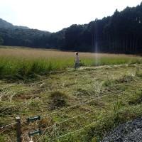 農園で草刈り後宴会(2016/10/18)