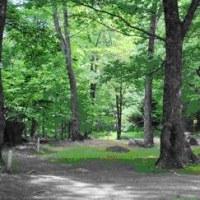 【本日】【日付訂正】11/8 地域の中で「森林セラピー」@稲毛byさろん花園・ほっと花園