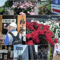 JRウォーキング-長者原 ( 駕与丁公園のバラ祭り )