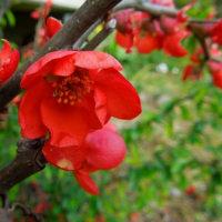 春の装い・庭の花