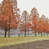 11月21日(月)滋賀県・セコイヤ並木~彦根城