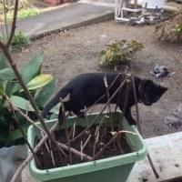 今年はチューリップが植えられない