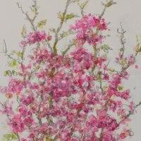 この木(花)何の木?気になる木