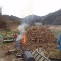 平成28年度産「丹波黒大豆生豆」の収穫が始まりました~~。