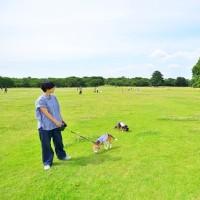 国営昭和記念公園に行ってきました♪