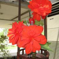 県立フラワーセンター美しい花です。