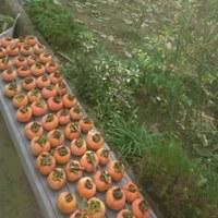収穫と遊水地