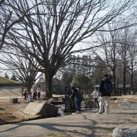 孫たちと一緒に白柴小太郎と公園散歩
