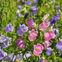 大船植物園~初夏を彩る花々
