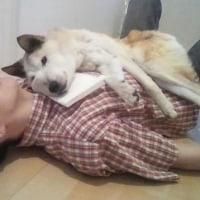 抱っこで眠るミニーちゃん