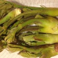 奈良朝市の野菜「タラの芽」も入荷しました♪