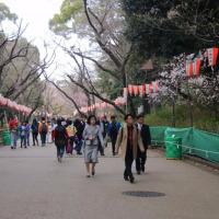 上野公園 正面玄関の枝垂れ桜と桜並木