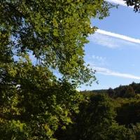 色付く森の窓に白線描く飛行機雲。
