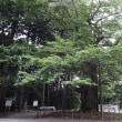 雲峰寺(うんほうじ)の桜 山梨県甲州市