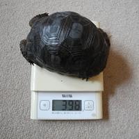 身体測定2016年10月23日 飼育7か月