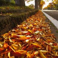 犬も歩けば、紅葉だらけ。