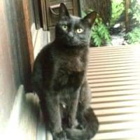むかしの妹猫
