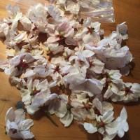 桜は冷蔵保存で持つんですって