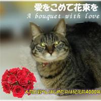 人間と猫の絆に愛をこめて花束を A bouquet with love・・・That person is superfly