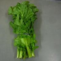 「こぶ高菜」