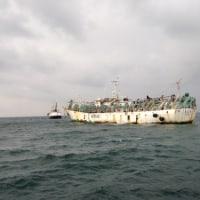 韓国 違法漁獲サンマの国内流入を防ぐ