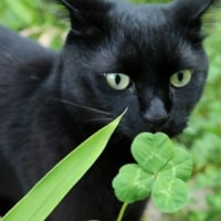 黒猫の庭~オオデマリ~