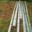 竹チップ作業
