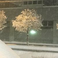 真綿のような雪