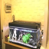 熱帯魚の水槽 壁のカビ・シミ対策でLIXILエコカラット