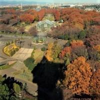 東京スカイツリーが身近な処から観られる。