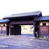 里山の風情が残る「座間谷戸山公園」のロウバイ見頃!!