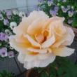 バラのある庭