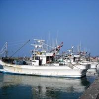 研究用ウグイ釣りは続く(北海道日高地方の漁港)