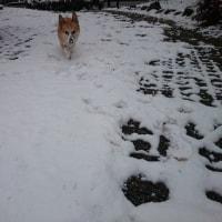 ☆また雪だったよ~('_')