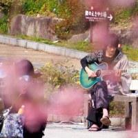 勝ちだるまと桜(3)& バンド演奏のコスプレイケメン~