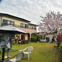 桜満開4月9日