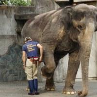 象のはな子さんに捧ぐ…
