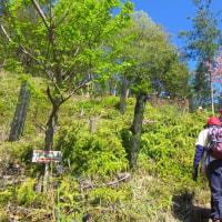 1 二ヶ城山(483m:安佐北区)登山  植樹へ給水の後に