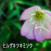 近所の路端の花から
