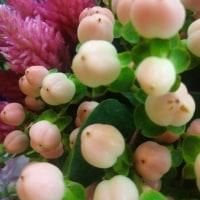 これから花の季節⁉