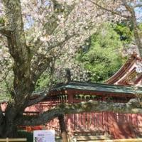みちのく桜旅 8・・・・・塩竃神社 2