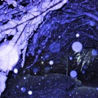 雪夜の桜トンネル。