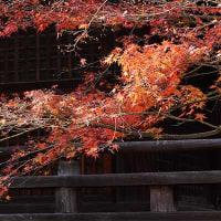30日の散歩 ( 慧光寺、淨福寺から妙蓮寺への散歩 )