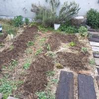 屋上菜園,畝つくり