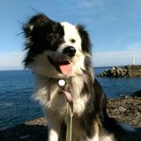 掘る犬と海