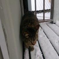 雪景色、ネコには似合わないね。