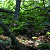 竹の子と毛虫そして妖精